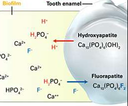 Fluoride Strenghtens the Tooth Structures